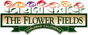 The Flower Fields - Carlsbad California